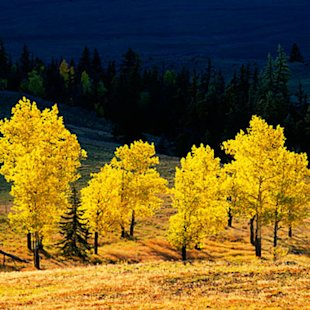 Aspens and oaks gild the slopes
