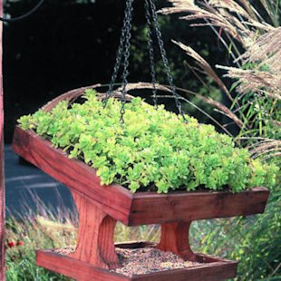 A miniature green roof
