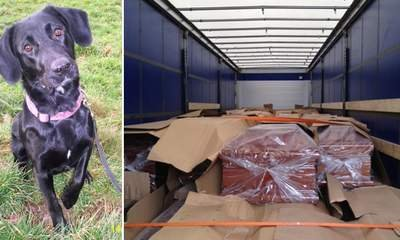 Sniffer Dog Finds Stowaways In Coffin Truck