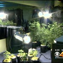 Bill Would Increase Oversight For Medical Marijuana Caregivers
