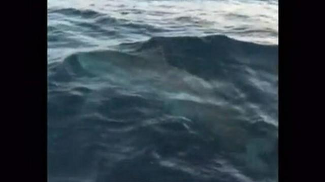 Great White Shark Hooked Off Florida Coast