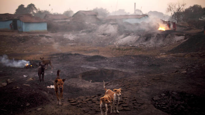 In this Thursday, Jan. 6, 2011 photo, stray dogs stand on the parched and burnt earth where underground coal fires are burning in the village of Bokapahari in the eastern Indian state of Jharkhand where a community of coal scavengers live and work. (AP Photo/Kevin Frayer)