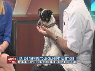 Ask Dr. Joe Pet Questions