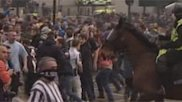 Hooligan 'punches police horse in face'
