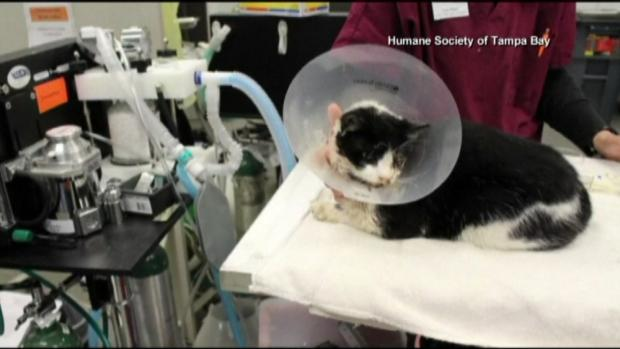 Bart the cat hit by car, buried and then crawls from grave