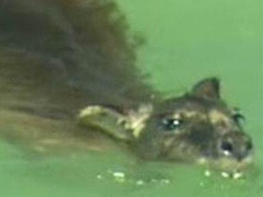 Actor Saves Wallaby from Croc-infested Waters