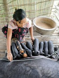 A Myanmar farmer, a client of a microfinance project worker, works on her pig farm at a village near the town of Pyapone in the Irrawaddy delta region on July 17. Microfinance initiatives -- which provide small, low-cost loans to the poor -- are seen by experts as a way to help alleviate poverty in one of the world&#39;s least-developed countries