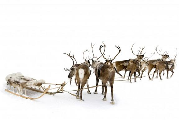 Magic Mushrooms May Explain Santa & His 'Flying' Reindeer