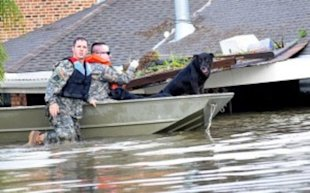 The National Guard Rescues Dogs during a hurricane.