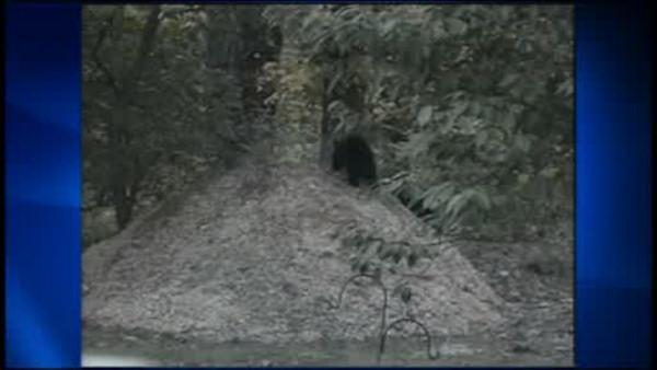 Hunt to control bear population begins in New Jersey