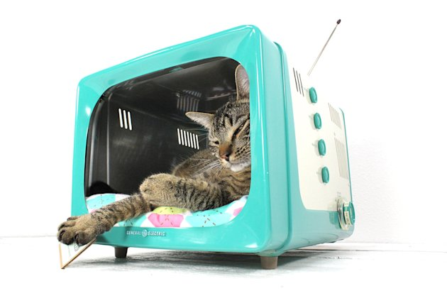12 incredible pet beds on Etsy teevee
