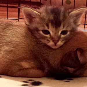 Abandoned Kitten and Puppy Instantly Become Best Friends in Shelter