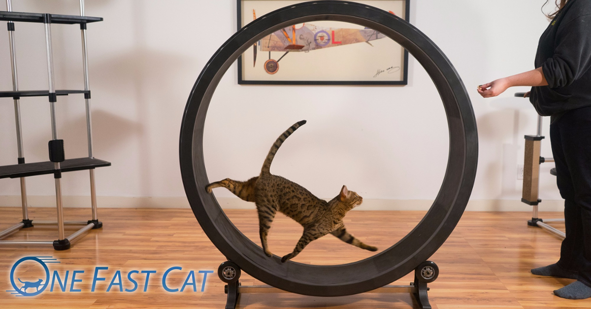The Ultimate Cat Toy is Here