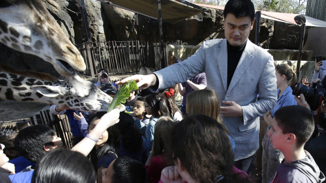 Former Houston Rockets basketball player Yao Ming joins a group of schoolchildren to feed the giraffes at the Houston Zoo on Thursday, Feb. 14, 2013, in Houston. Yao has been working to bring awareness to the need to protect endangered species, a cause he's undertaken since retiring from basketball in 2011.(AP Photo/Pat Sullivan)
