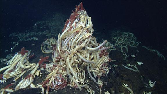 Deep-Sea Worms Can't Take the Heat