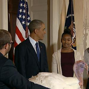 Obama daughters pass on petting pardoned turkey