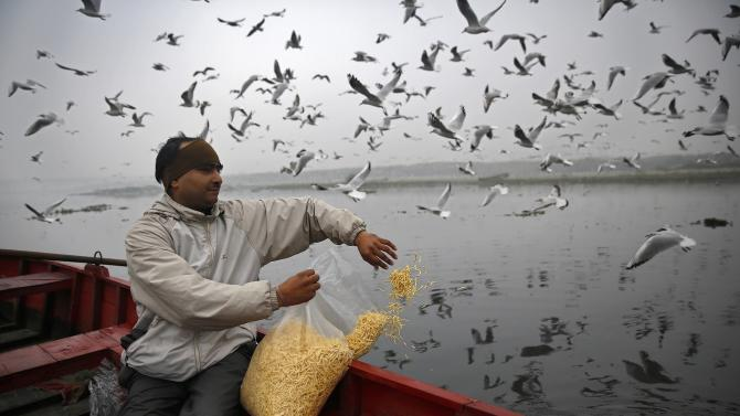 A man feeds flying seagulls over the waters of the river Yamuna in New Delhi