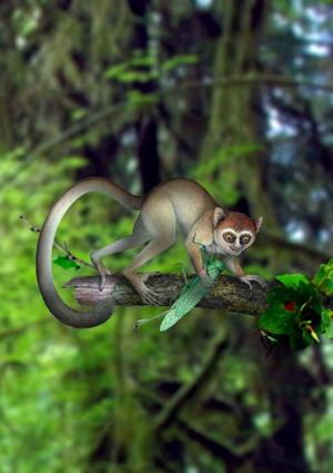 Ancient Primate Skeleton Hints at Monkey and Human Origins