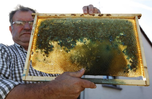 French apiarist Andre Frieh holds a coloured honeycomb in a wood frame from one of his beehives at his home in Ribeauville