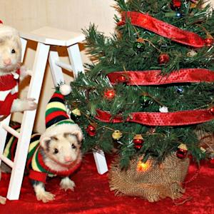 Small Pets Are Getting Into the Holiday Spirit