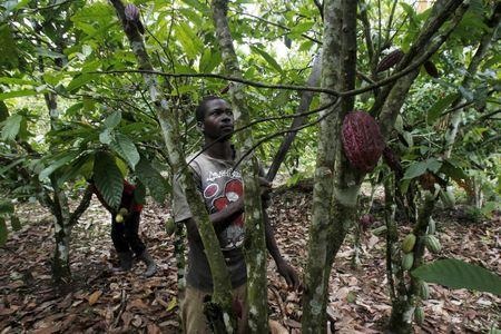 Ivory Coast seeks to save forests from illegal cocoa boom