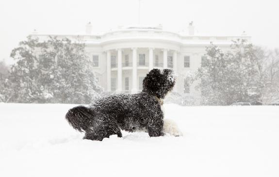 First Paws: A History of Presidential Pets