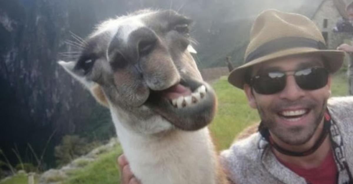 15 Animal Selfies So Rudely Interrupted by People