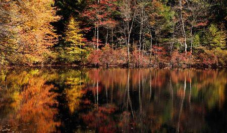 New England man offers to ship autumn foliage for $19.99
