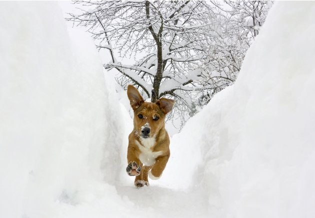 A dog runs in a snow shaft in Ljubljana