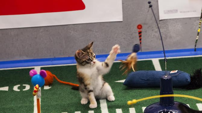"This undated publicity photo provided by Animal Planet shows the Kitty half time show during ""Puppy Bowl IX,"" in New York. The ""Puppy Bowl,"" an annual two-hour TV special that mimics a football game with canine players, made its debut eight years ago on The Animal Planet. The show provides national exposure to the shelters across the country that provide the puppy athletes and the kittens that star in the halftime show, and introduces viewers to the different breeds and animals that need homes, animal workers say. (AP Photo/Animal Planet, Keith Barraclough)"