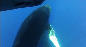 A Whale of a Boat Ride Caught on Video