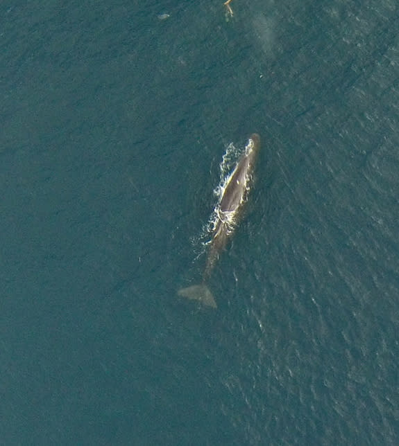 Meet a One-Eyed, Six-Legged, Flying Whale Chaser