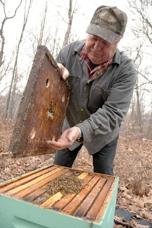 In this Dec. 11, 2010 photo, beekeeper Terry Klein, 70, of TM Klein and Sons Honey, checks one of the 1,000 hives of honey bees he keeps on his property in St. Charles, Mich. Klein is one of many Michigan beekeepers worried that efforts to combat an invasive plant that is crowding out native vegetation could leave them without a key source of nectar and pollen that helps keep their honeybees productive and healthy. (AP Photo/Steven L. Simpkins)
