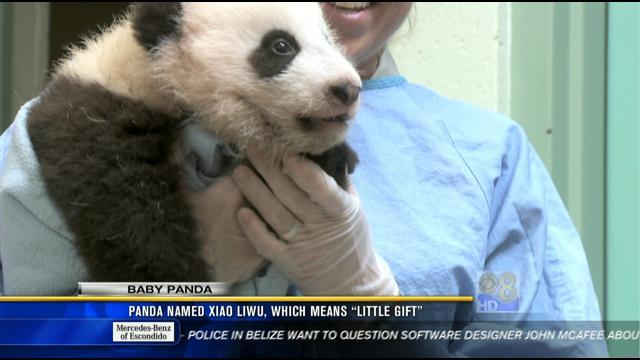 Newest panda cub gets his name