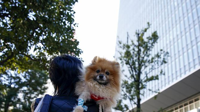 A woman carries a Pomeranian dog on a sunny autumn day in Tokyo