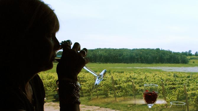 In this July 31, 2011 photo, Becky Brandt, 58, of Enderlin, N.D., samples wine in the Richwood Winery tasting room while overlooking the grapevines in Richwood, Minn. Richwood has nine wines, all but two that contain Minnesota fruit.  (AP Photo/Dave Kolpack)