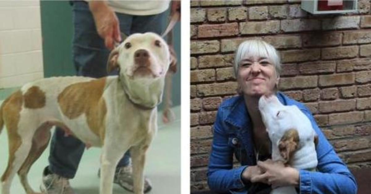 Before & After Showing Why You Should Adopt A Dog