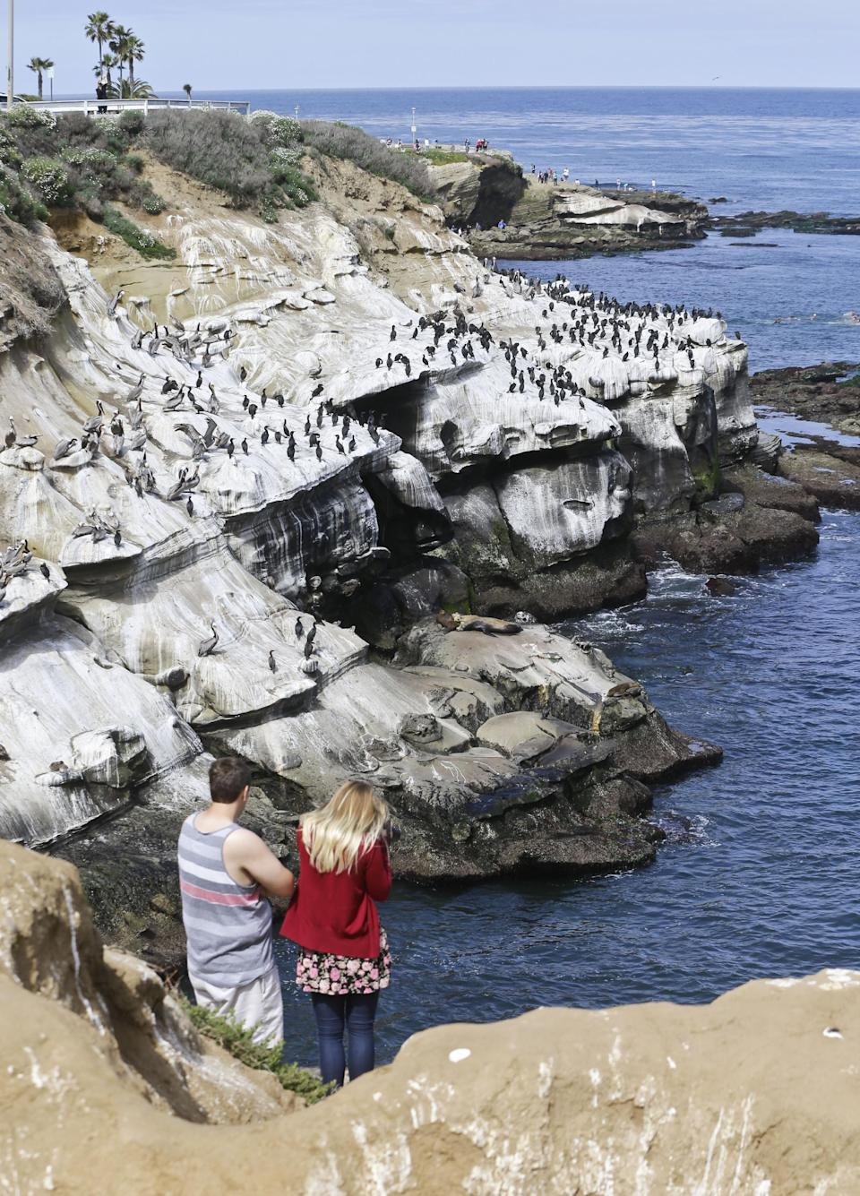 Tourist take photo of the massive bird gathering on the cliffs in the La Jolla section of San Diego, Tuesday, April 2, 2013.  The birds have turned the cliffs white with their droppings and caused a stench in the area that draws tourist to restaurants and hotels.  (APPhoto/Lenny Ignelzi)