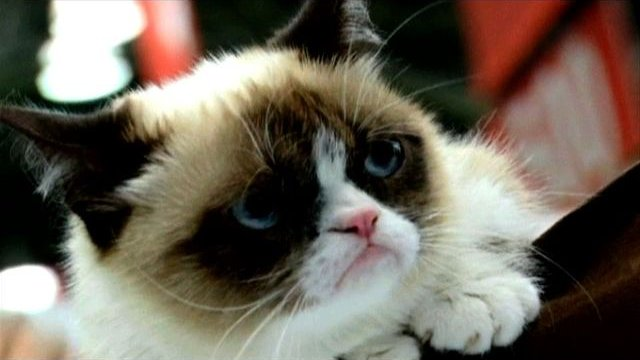 Grumpy Cat Releases A Book