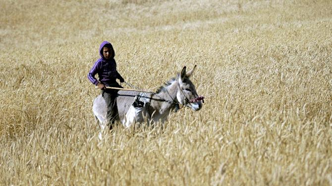 A Palestinian Bedouin youth rides a donkey in the northern Jordan Valley near the West Bank town of Tubas, Monday, April 29, 2013. (AP Photo/Mohammed Ballas)