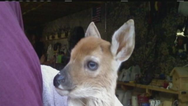 Indiana police officer, wife could face jail time for saving a deer