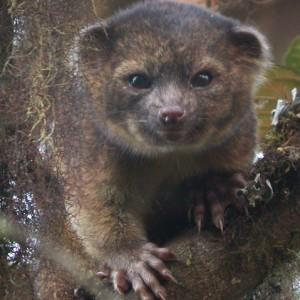 Previously Unknown Mammal Spent Decades Hiding in Plain Sight