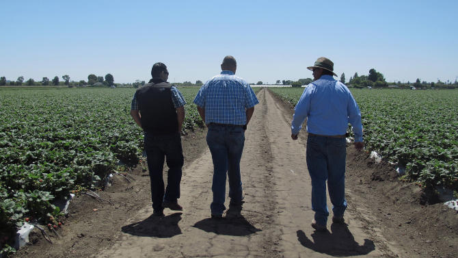 In this photo taken July 9, 2012, Rogelio Ponce Sr., right, and his two sons, Rogelio Ponce Jr., left, and Steven Ponce, center, walk on Monday, July 9, 2012 at the family's ranch in Watsonville, Calif., where the Ponces grow nearly 200 acres of strawberries. Ponce Sr., whose father migrated from Mexico and grew berries as a sharecropper, sold the family's home to start his own strawberry business some 20 years ago. Latino growers like the Ponces now dominate the California strawberry industry. (AP Photo/Gosia Wozniacka)
