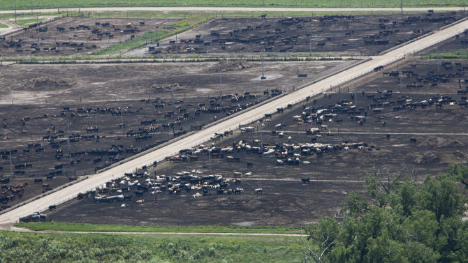 In this June 16, 2010 photo, a feedlot operation near Wisner, Neb., is seen from the air. The Environmental Protection Agency's use of airplanes to seek signs of improper disposal of livestock waste has angered ranchers and some members of Congress. The dispute is centered in Nebraska, where ranchers complain the EPA kept its aerial inspections quiet until revealing them at a meeting three months ago. (AP Photo/Nati Harnik)