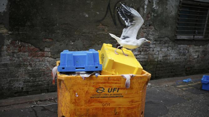 A gull stands on a container full of discarded fish scraps behind a fish processing facility in Grimsby, Britain