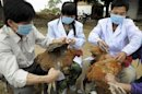 H7N93 35.