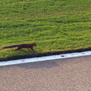 Squirrel squeaks past leaders in Atlanta