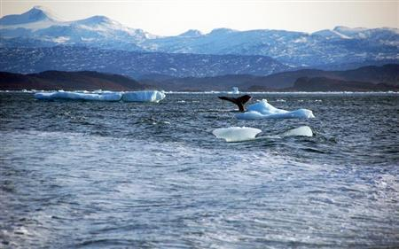 Whale dives into sea off the coast of Greenland's capital Nuuk