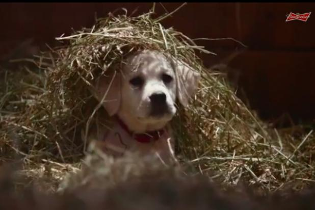 Budweiser's 'Lost Puppy' Super Bowl Ad Will Make Football Fans Cry in Their Nachos (Video)