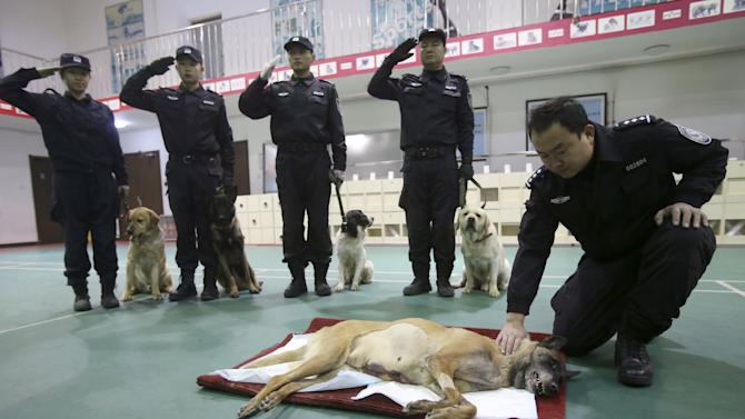 Policemen salute as they attend a farewell ceremony for explosive-sniffing police dog Tiantian  at a police base in Beijing